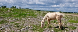 Project Addresses Free-Roaming Horses